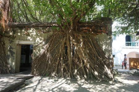 【台湾・台南観光】展示品を見てガジュマルの生命力に圧倒される安平樹屋