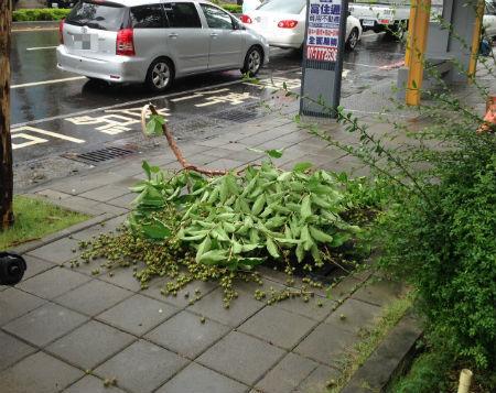 【台湾グルメ】台湾に台風が来た日の過ごし方について
