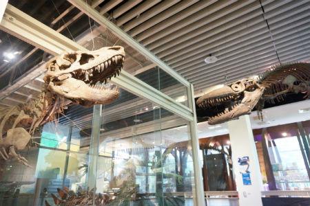 【台湾・台南旅行】台南観光をするなら樹谷生活科学館がオススメ!