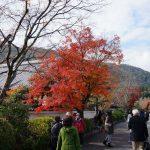 [台湾から関西旅行]紅葉の残る京都・嵐山・金閣寺をバスツアーでまわる