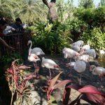 【台湾高雄の動物園】高雄国際空港の近くにある動物園・淨園農場