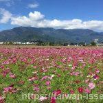 【台湾・台東観光】台東でのどかな風景を楽しめるスポット4選